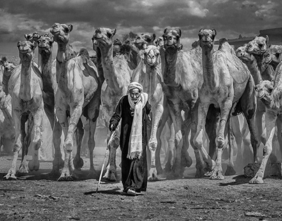 Camels Market - Photography Project