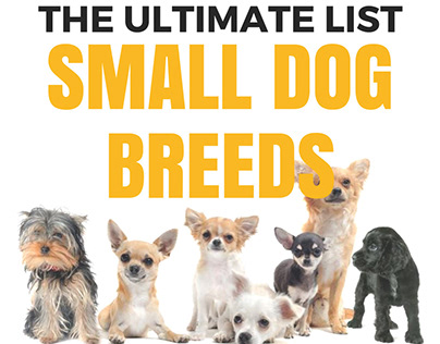 A Big List of 50 Small Dog Breeds