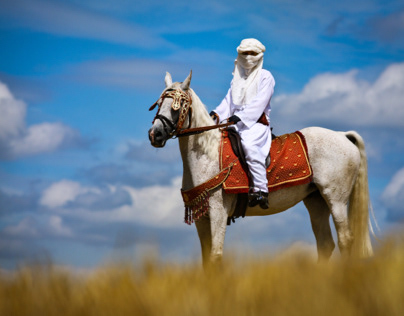 1001 nights, arabian horse with rider