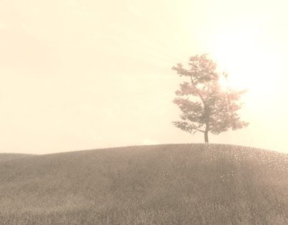 The Meadow VR