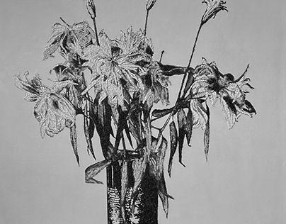fiori, piante ed altro