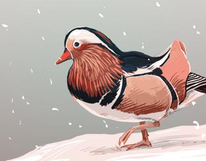 The Bird Special