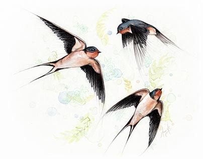 Projet oiseaux du Québec