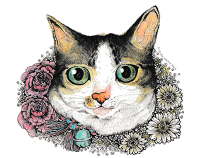 Illustrations for my cats
