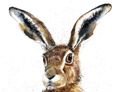 Hares...The Update