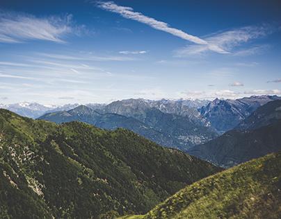 Old Pine - Switzerland