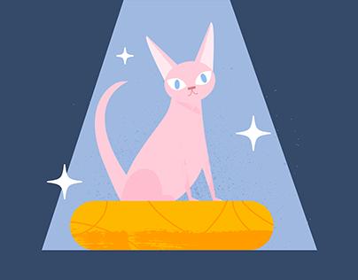 Sphinx Cat breeding