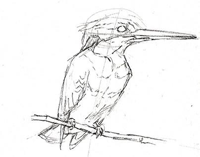 Pencil drafts for the European Atlas of Breeding Birds