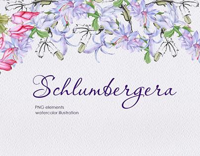 Schlumbergera