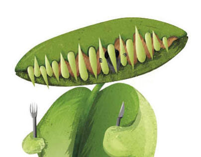 Venus flytrap's guide