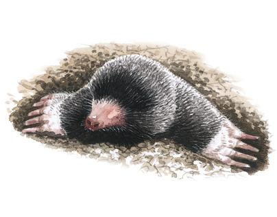 Guía dos mamíferos de Galicia