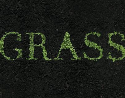 growing type - grass // 2013