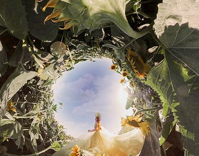 Sunflower World