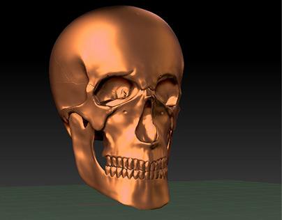 Skull sculpture | ZBrush