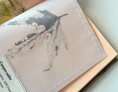 Cuerpos caídos / Herbarium / Editorial Design