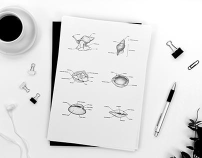 Snail Illustrations for Tromsø Museum