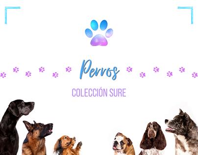 Colección Todo Perros 🐾