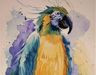 Попугай Ара не только красивый,но и умный.