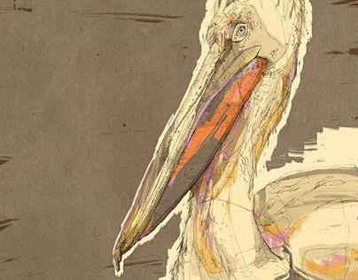 Birdlover Series