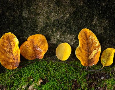 Golden Leaf Trees