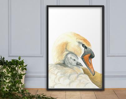 Swan motherhood