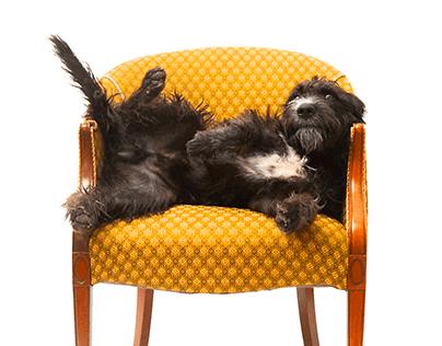 Digital Retouching: Pet Photography