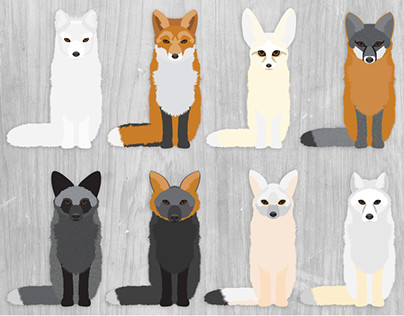 Fox Species Illustration Set