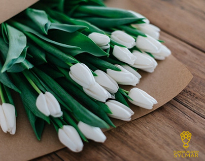 Fresh White Tulips for Christmas Day