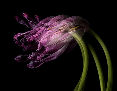 Wilde Blüten