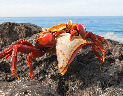 Crab/Seagull/SeaLion