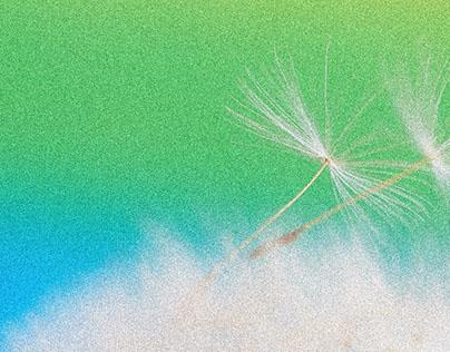 Dandelion Fluff 4 HD Wallpaper 1920x1080
