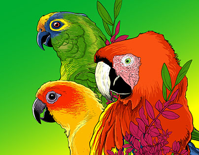 BIRDS from BRAZIL
