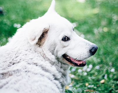 2015 FJU Doggy Club 募資計畫攝影