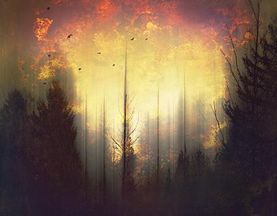 distorted landscapes