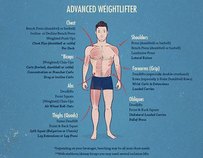 Muscle-Building Anatomy Illustation