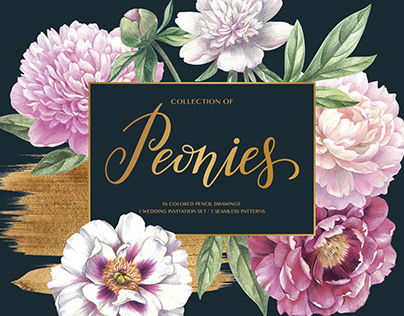 Peonies – Colored pencil drawings. Cards and Patterns.