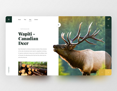 Wapiti - Canadian Deer. Webdesign with animation