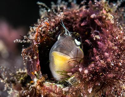 Alor Komodo | Part 3 - Diving Advenure Day 2