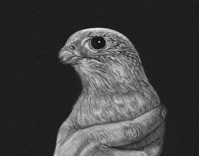 Animal Portraits - Falcon
