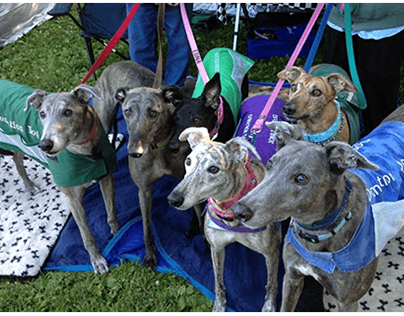 Greyhound Pets of America - Indianapolis