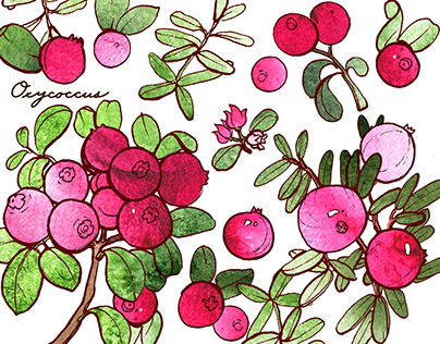 Berries, plants, nuts. The series of graphics.