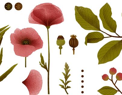 NEAVITA - botanicals