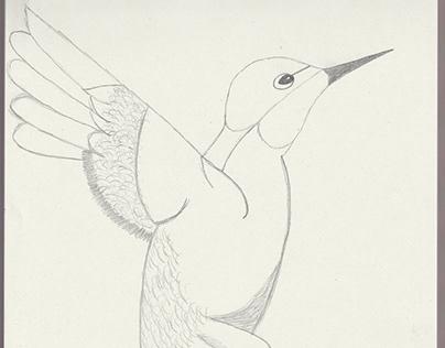 My hand drawn images - Humming Bird