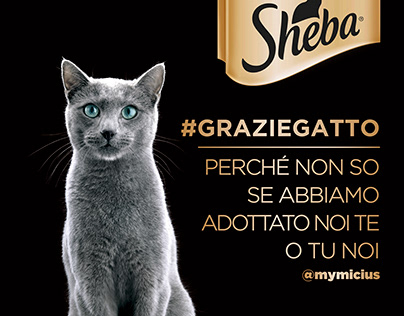 sheba - grazie gatto