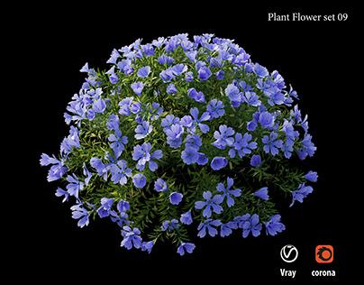 Plant Flower set 09