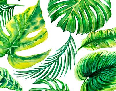 Tropical leaves watercolor.