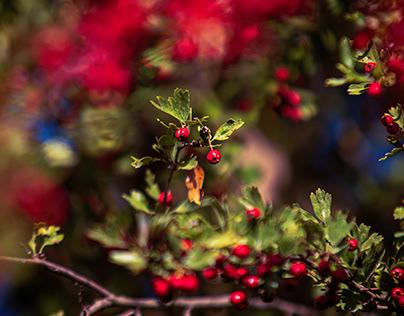Im Licht – die Beere. In the light - the berry.