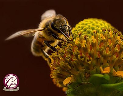 The Golden Bee by Karen Brammer.