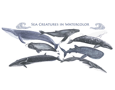 Sea Creatures in Watercolor for an Identification Guide