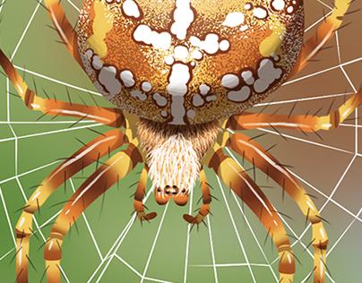 Wapiti n°368 • Spiders